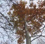 Atelier d'identification des arbres indigènes