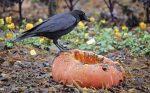 Comment tenir les oiseaux nuisibles à distance de votre jardin?